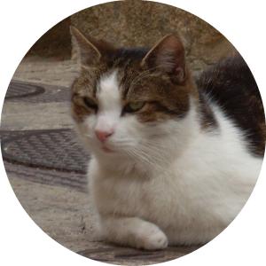 Katze_rund